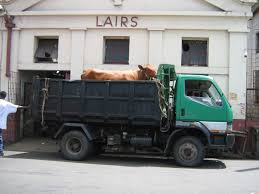 Slaughterhouse Blog by Daily Photos U0026 Frugal Travel Tips Blog Archive Cow Outside