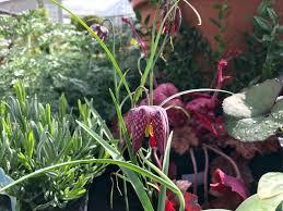 outdoor u0026 indoor plants u2014 pomarius nursery plants with character