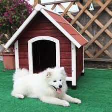 cool cheap houses cool indoor dog houses