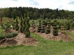 trees ornamental shrubs archives pell family farm