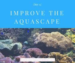 Saltwater Aquascaping Improve The Aquascape Saltwater Aquarium Blog