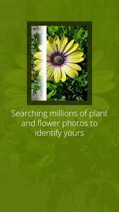 likethat garden flower identification app apppicker