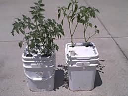 How To Make A Self Watering Planter by How To Make A Single Bucket Self Water Regulated Vegatable Planter