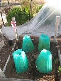 gardening tips cody witt real deal compost