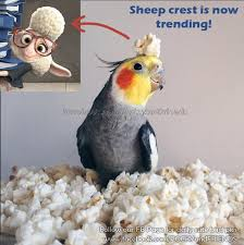 Parrot Meme - zootopia bird meme by emmil on deviantart