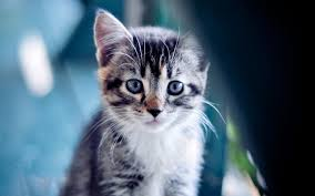 cute little cat 1562 kitty animal