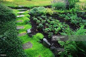 Strawberry Bed Pathway Irish Moss And Strawberry Bed Stock Photo Getty Images