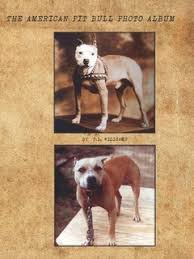 american pitbull terrier merchandise american pit bull terrier collector edition books