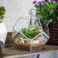 amazon succulents amazon com silver clear glass dodecahedron geometric terrarium