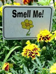 Sensory Garden Ideas Vegetable Garden Ideas For Ghanadverts Club