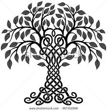 celtic tree of stock images royalty free images vectors