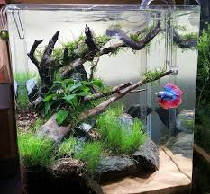 Tank Aquascape Planted Tank Scenic Cove By Brian Murphy Aquarium Design Contest