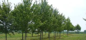trees wreaths spading service howell tree farm
