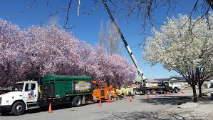 utah tree removal pruning stump nye s tree services