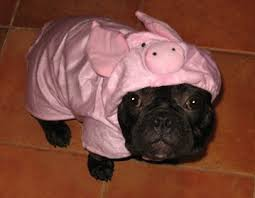 Frenchie Halloween Costume Pics U003e French Bulldogs Halloween Costumes Dogs