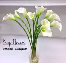 cut flowers keep cut flowers fresh longer snappy living