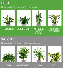 best plants for air quality healthy houseplants your stuffy nose will love