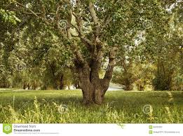 big tree in forest glade with grass beautiful summer landscape