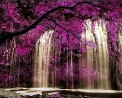 images of waterfall wallpaper flowers red sc