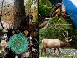 Washington wildlife tours images Experienceolympic tour of olympic national park port angeles wa 98362 jpg