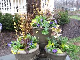 midwest native plants start thinking about spring flower containers midwestern plants