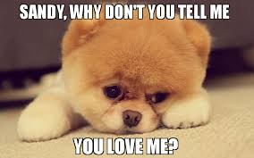 Why You No Love Me Meme - sandy why don t you tell me you love me meme sad puppy 77184