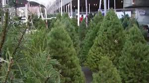 christmas tree prices shortage prompts christmas tree prices to rise nbc bay area