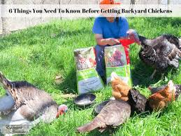 the ultimate guide to keeping chickens at home experimental