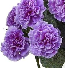 different types of purple types of purple flowers purple carnation flowers different types of