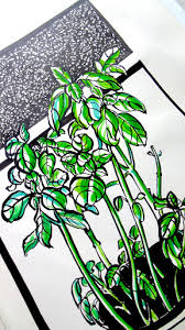 sketches of plants