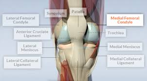 3d Knee Anatomy Knee Pain You May Be Eligible For A Clinical Trial