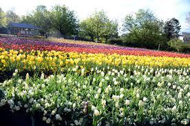 bulb garden layout floriade canberra wikipedia