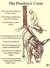 230 donkeys images donkeys animals felt