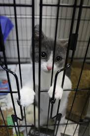 The Shelter by Clear The Shelter Offers Free Cats Kittens Saturday Spotlight