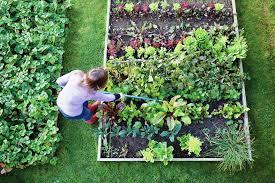 which vegetable garden plants have you already got garden design
