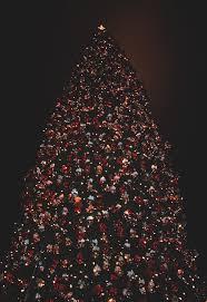 73 best christmas lights images on pinterest christmas lights