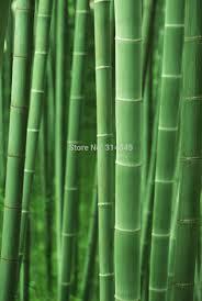 online shop canvas print art painting abstract art bamboo art