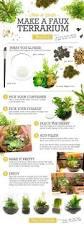 best 25 making a terrarium ideas on pinterest terrarium plants