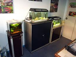 aquarium bureau association comtoise d aquariophilie archives du les