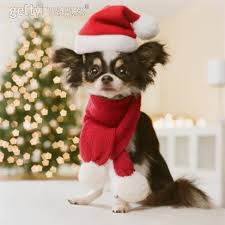 all small dogs images merry wallpaper and background