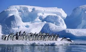 imagenes de la antartida afirma que la antártida albergó una selva tropical