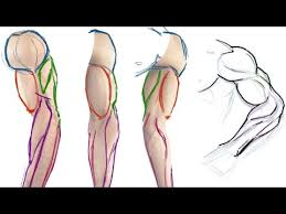Anatomy Of The Right Arm How To Draw The Muscles Of The Arm Simple Anatomy Tutorial Youtube