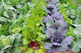 Weather Zones For Gardening - timeless garden tips for early february harvest to table