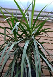 Medusa Planter A Breath Of Fresh Air Houseplants Fairview Garden Center