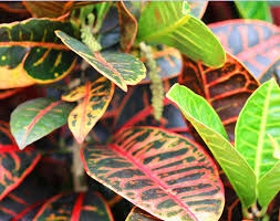 tropical house plants common office plants urban jungle bloggers