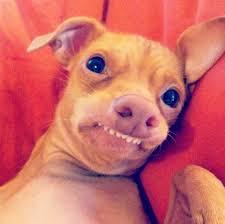 Tuna The Dog Meme - tuna overbite dog 1 jpg 603 599 pixels dogs pinterest tuna dog