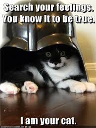 Star Wars Cat Meme - lolcats darth vader lol at funny cat memes funny cat