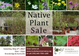 native plant seeds for sale native plant sale muskoka conservancy