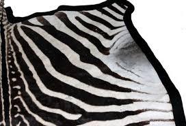 large authentic zebra skin rug omero home