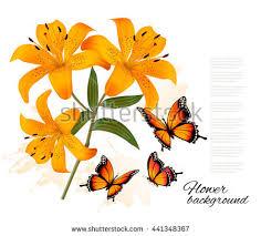 flower background three beautiful lilies butterflies stock vector